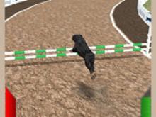 Köpek Yarışı Simülatörü 3D
