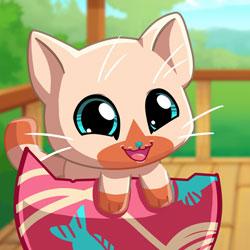 Cebimdeki Hayvanlar: Kitty Cat