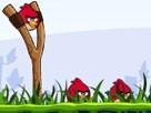 Kızgın Kuş