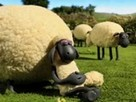 Koyunları Atlat oyunu